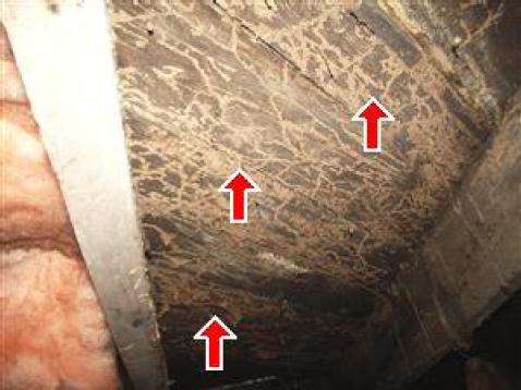 Severe Termite Damage