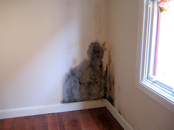 Greensboro home inspector finds mold during an inspection.